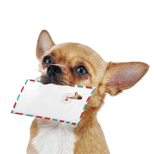 Hund mit Brief