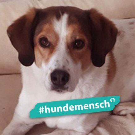 Hundemensch Birgit Gröber