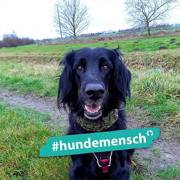 Hundemensch Claudia Hameister