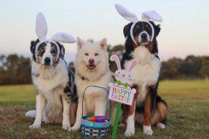 Osterüberraschung für deinen Hund