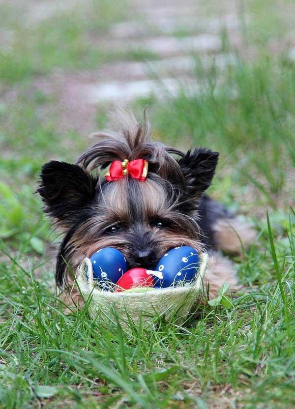 Ostereier suchen für Hunde