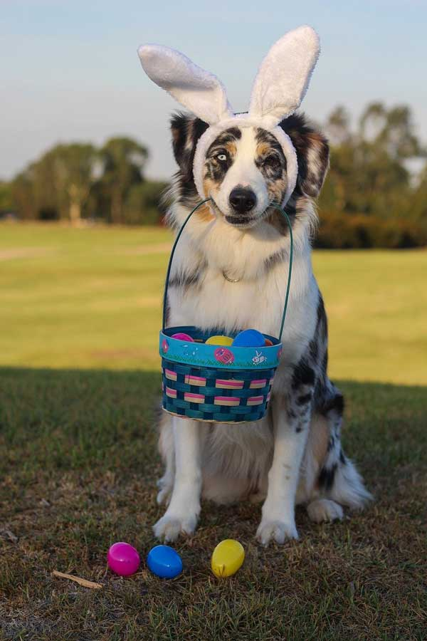 Osteraufgabe für Hunde