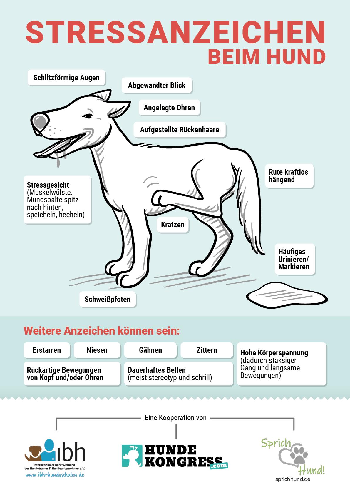Stressanzeichen beim Hund