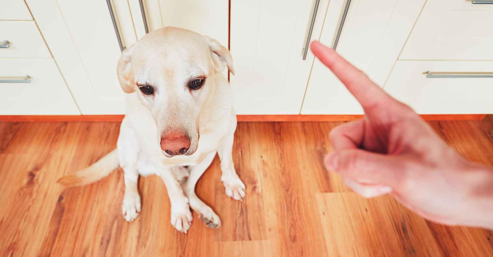 Schimpfen mit Hund