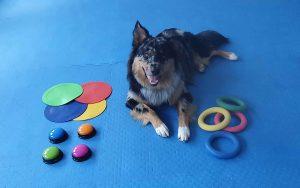 Kreatives Training für intelligente Hunde